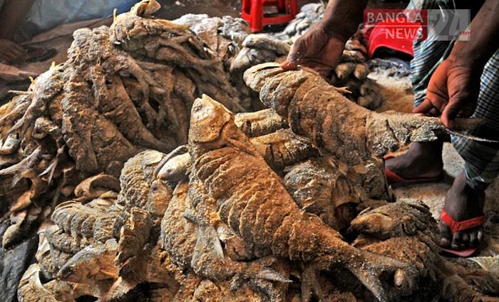 চট্টগ্রামের কাট্টলী রানী রাসমণি ঘাট থেকে ধরা ইলিশে লবণ দিয়ে সংরক্ষণ করা হচ্ছে। ছবি: উজ্জ্বল ধর