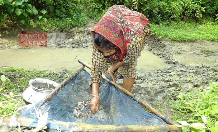 খালে জাল দিয়ে মাছ ধরছেন এক নারী। পাবনার ঈশ্বরদী কমলা নদীর খাল থেকে ছবিটি তুলেছেন টিপু সুলতান।